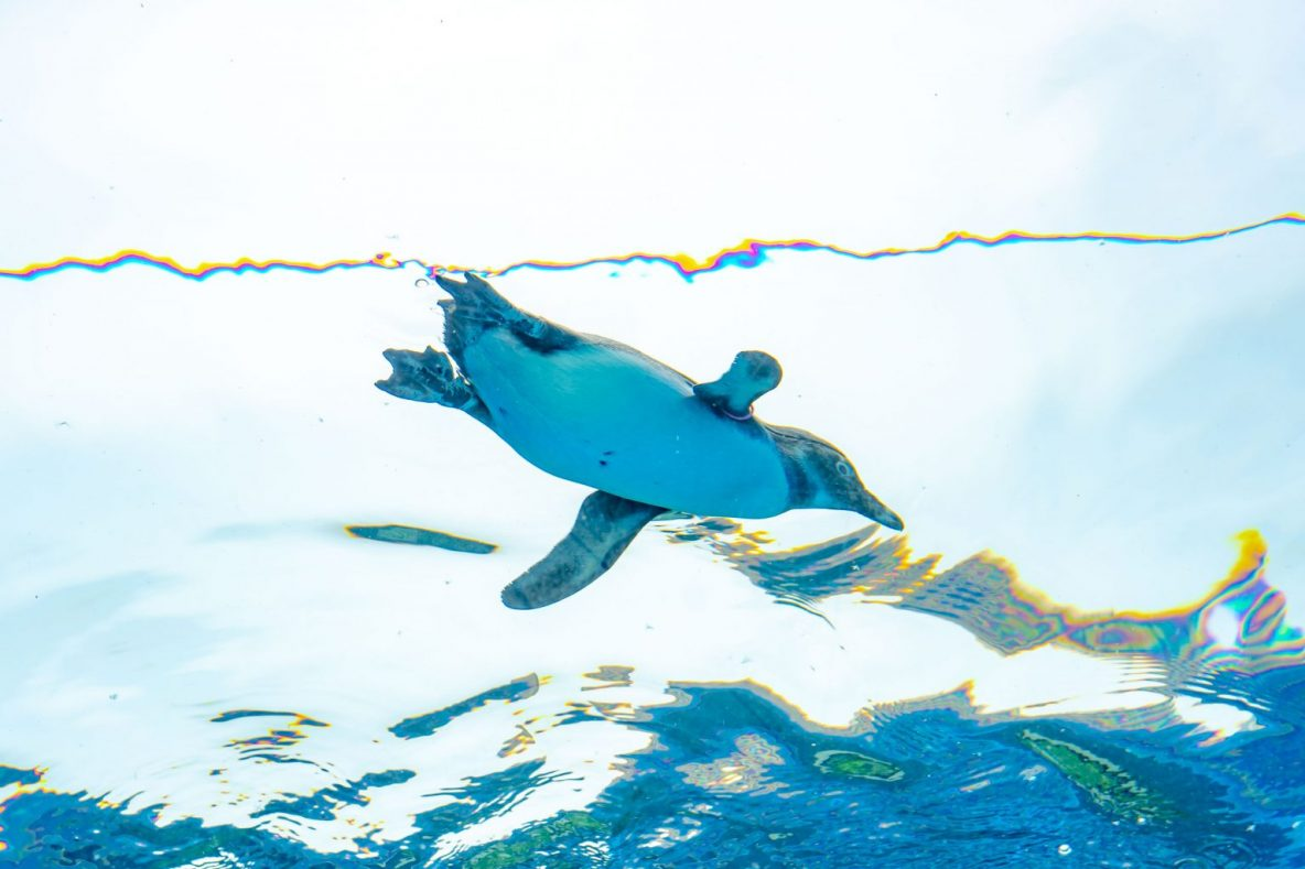 【学生向け】サンシャイン水族館 WEB整理券
