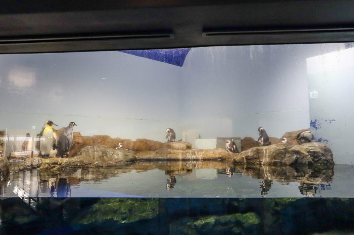 マクセルアクアパーク品川ペンギン